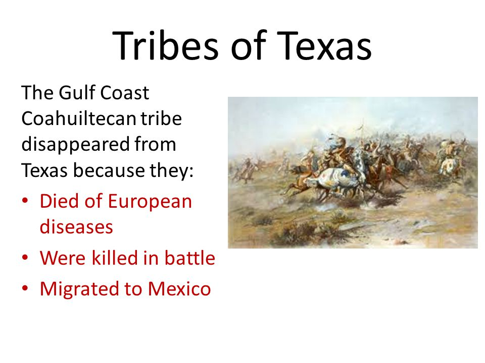 Tribes of Texas The Gulf Coast Coahuiltecan tribe disappeared from Texas because they: Died of European diseases.