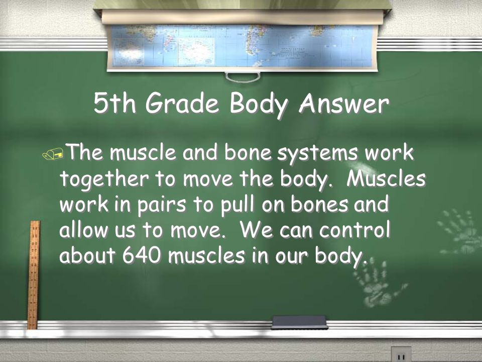 5th Grade Body Answer