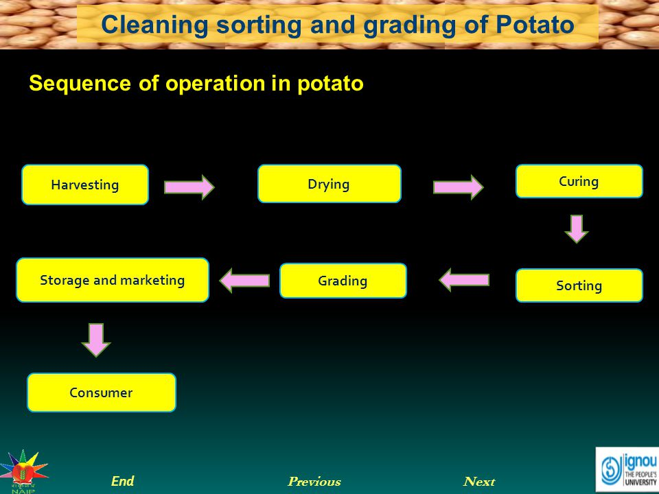 Sequence of operation in potato