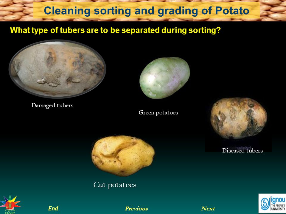 What type of tubers are to be separated during sorting