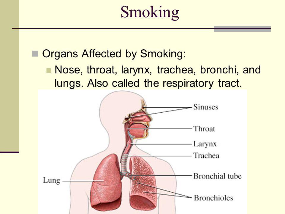 Smoking Organs Affected by Smoking: