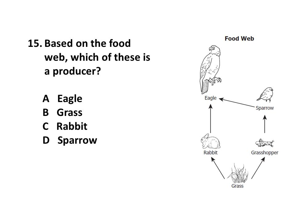 Based on the food web, which of these is a producer