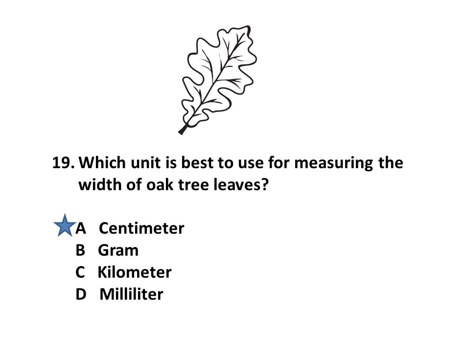 Which unit is best to use for measuring the width of oak tree leaves