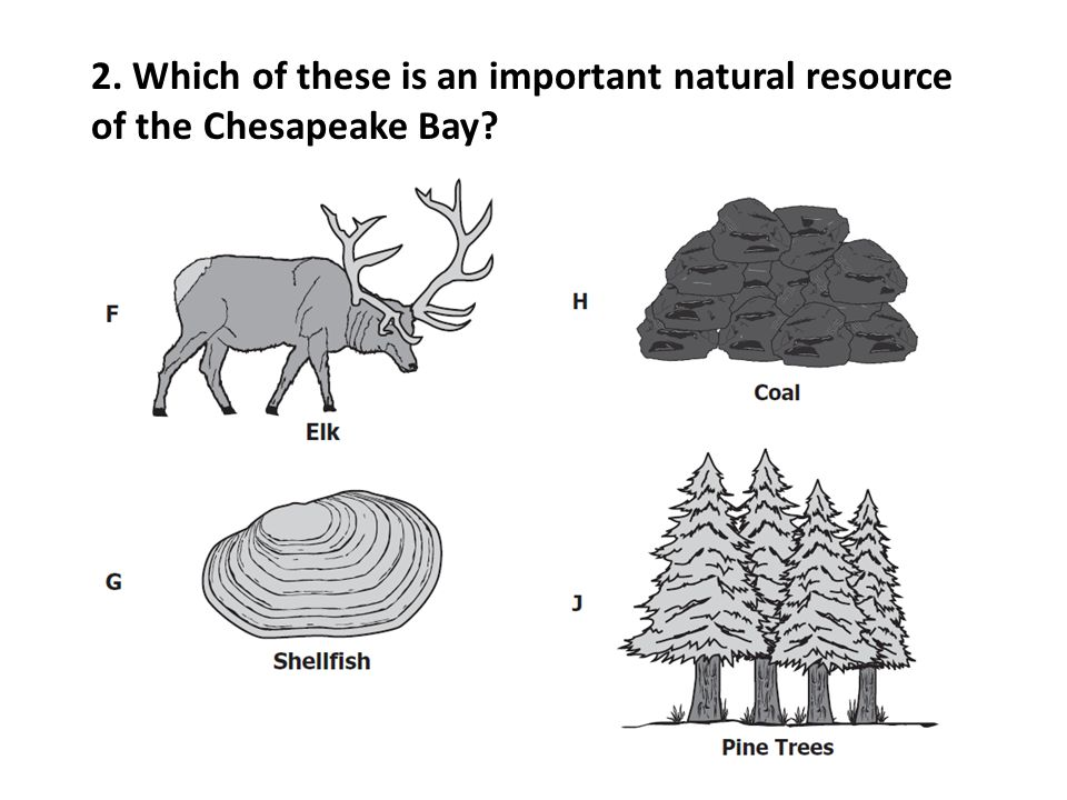 2. Which of these is an important natural resource of the Chesapeake Bay