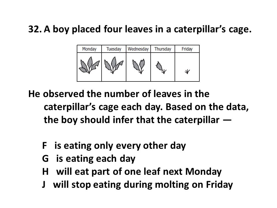 A boy placed four leaves in a caterpillar's cage.