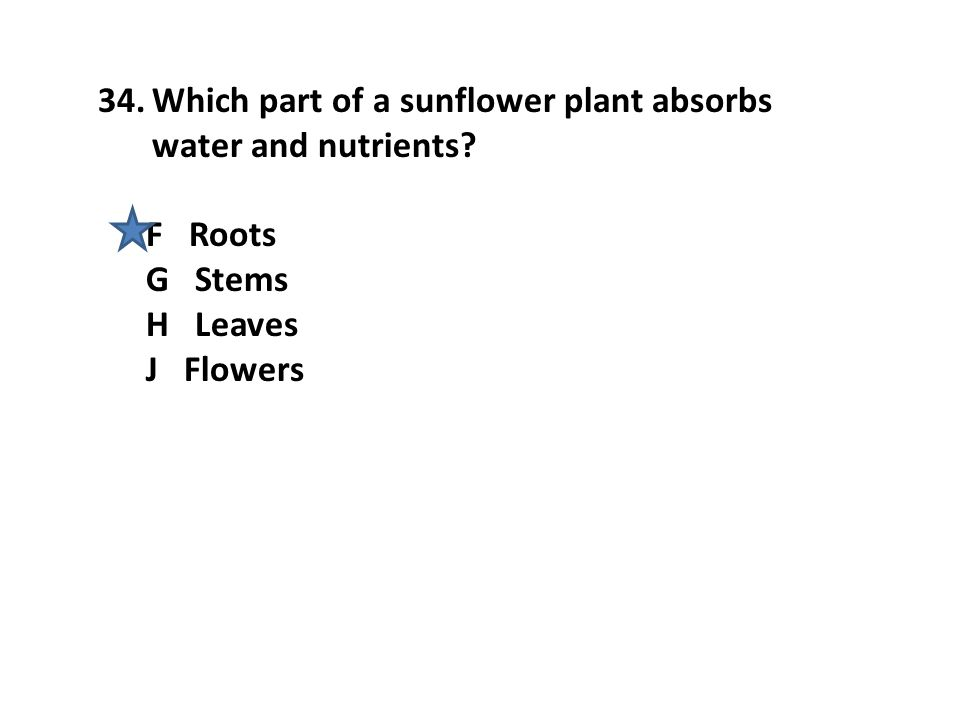 Which part of a sunflower plant absorbs water and nutrients
