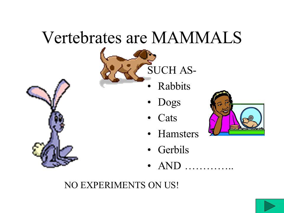 Vertebrates are MAMMALS