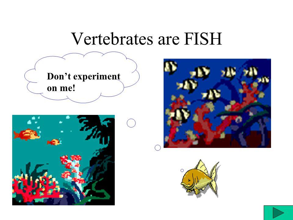 Vertebrates are FISH Don't experiment on me!
