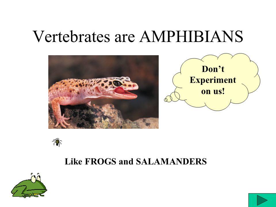 Vertebrates are AMPHIBIANS