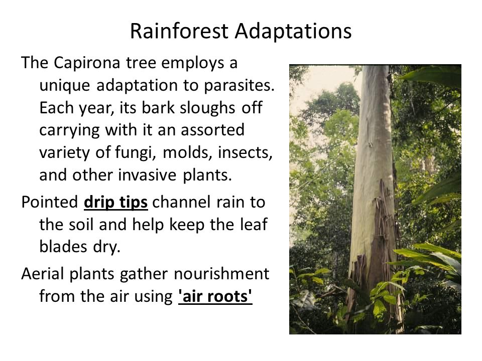 Rainforest Adaptations