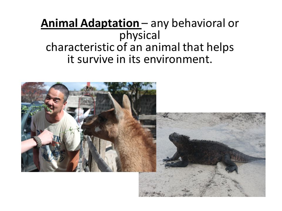 Animal Adaptation – any behavioral or physical