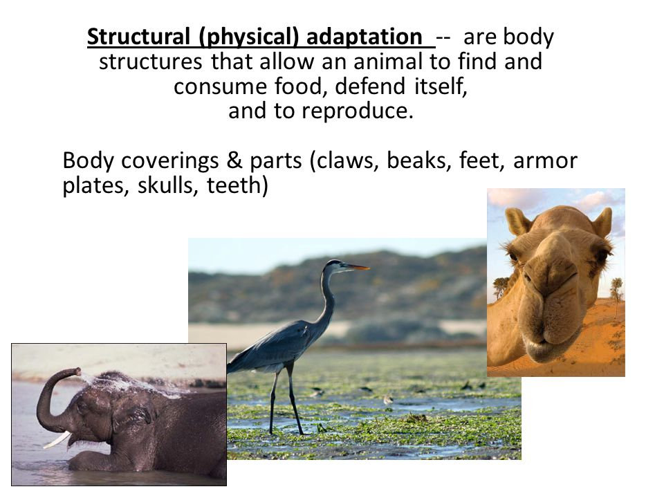 Structural (physical) adaptation -- are body structures that allow an animal to find and consume food, defend itself,