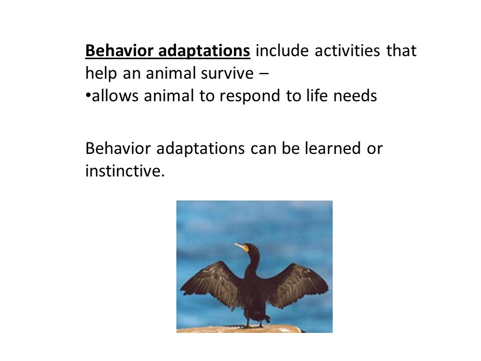 Behavior adaptations include activities that help an animal survive –