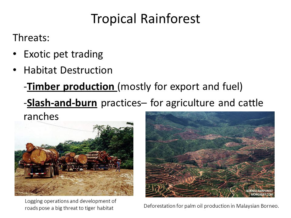 Tropical Rainforest Threats: Exotic pet trading Habitat Destruction