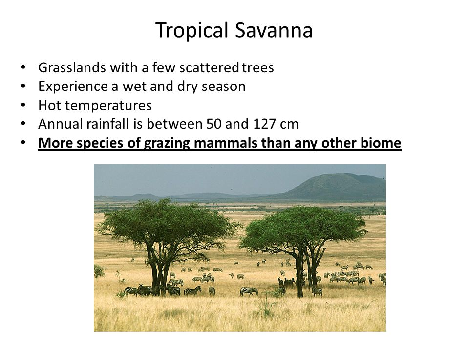 Tropical Savanna Grasslands with a few scattered trees
