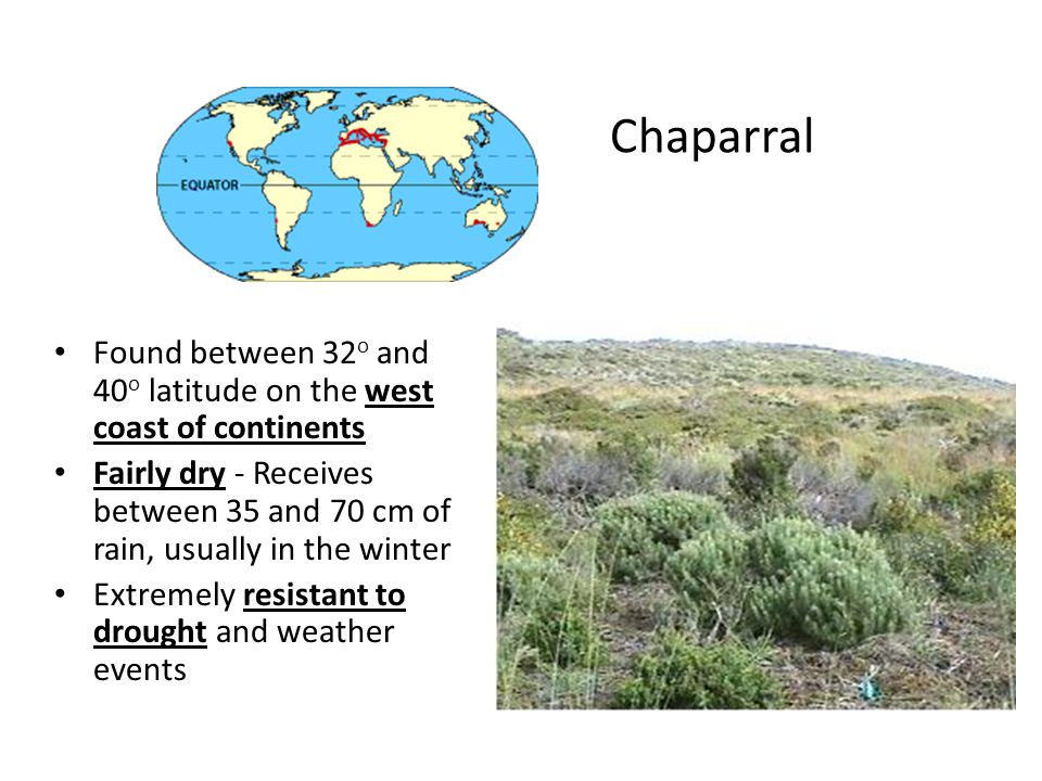 Chaparral Found between 32o and 40o latitude on the west coast of continents.