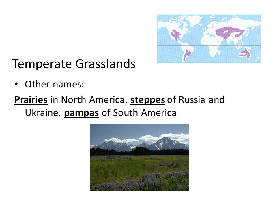 Temperate Grasslands Other names: