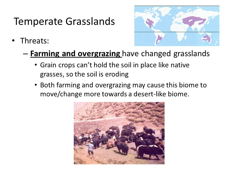 Temperate Grasslands Threats: