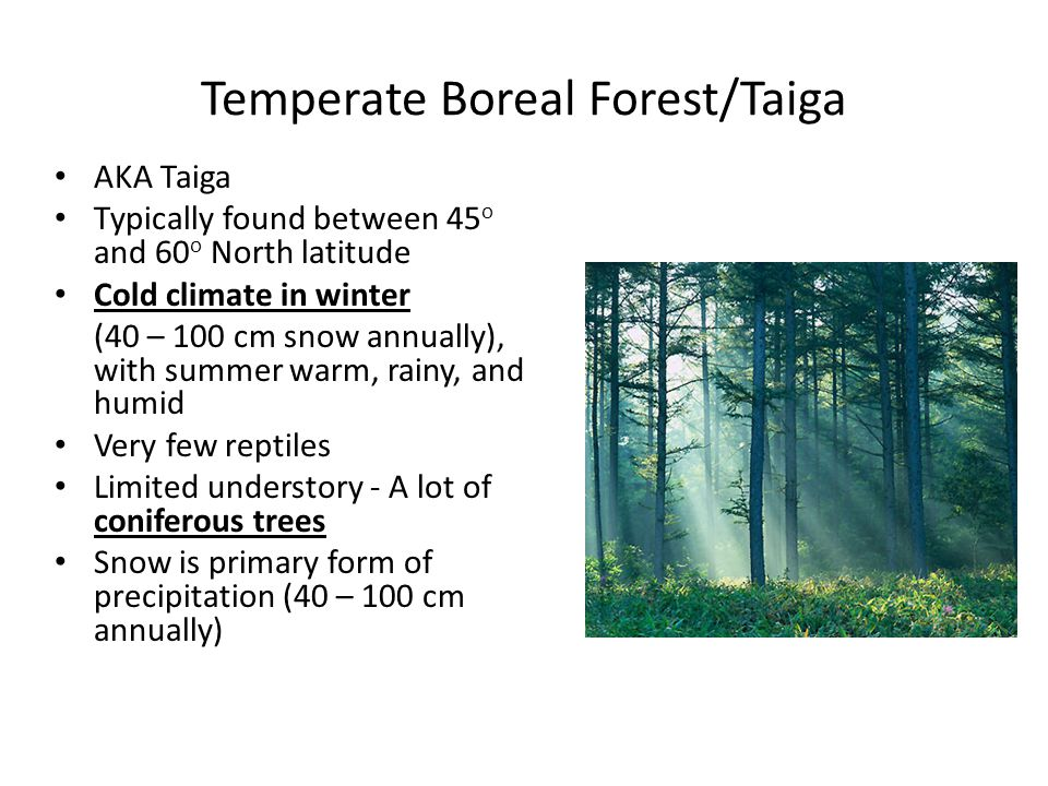 Temperate Boreal Forest/Taiga