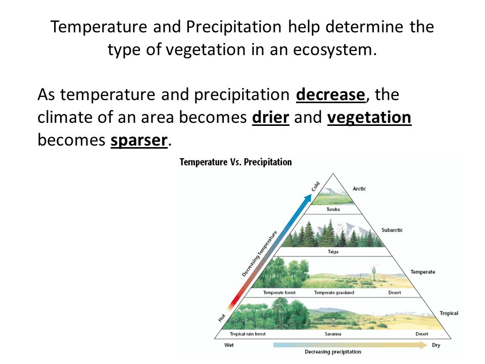 Temperature and Precipitation help determine the type of vegetation in an ecosystem.
