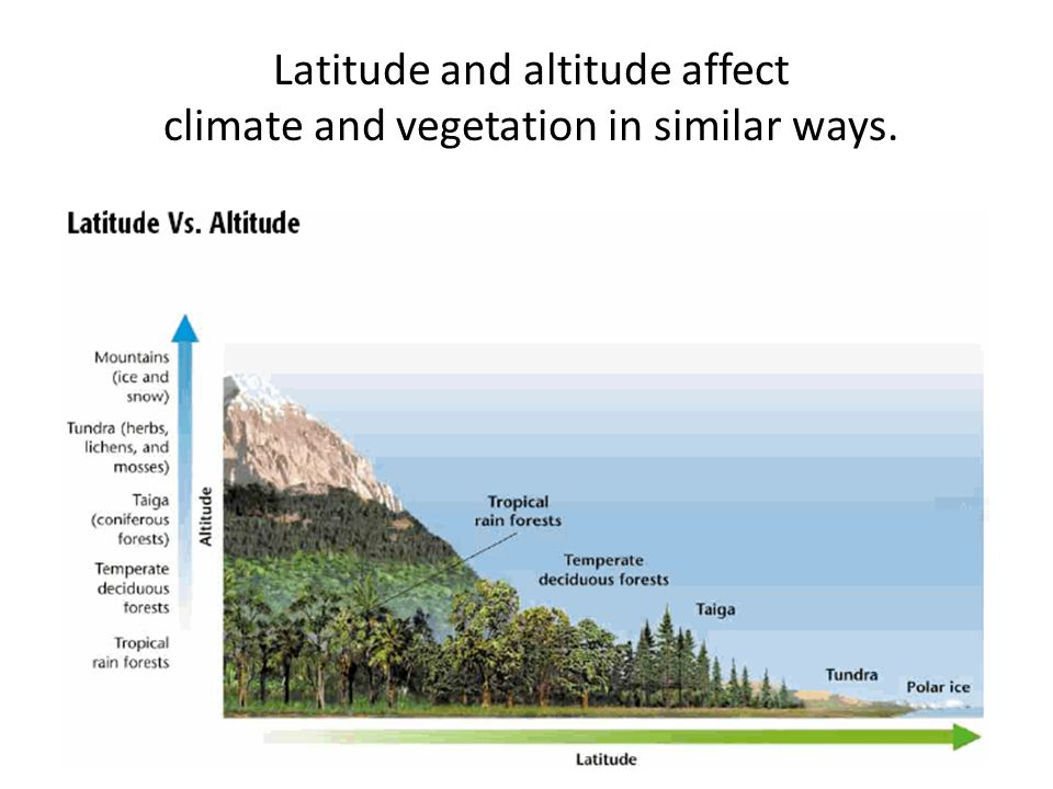 Latitude and altitude affect climate and vegetation in similar ways.