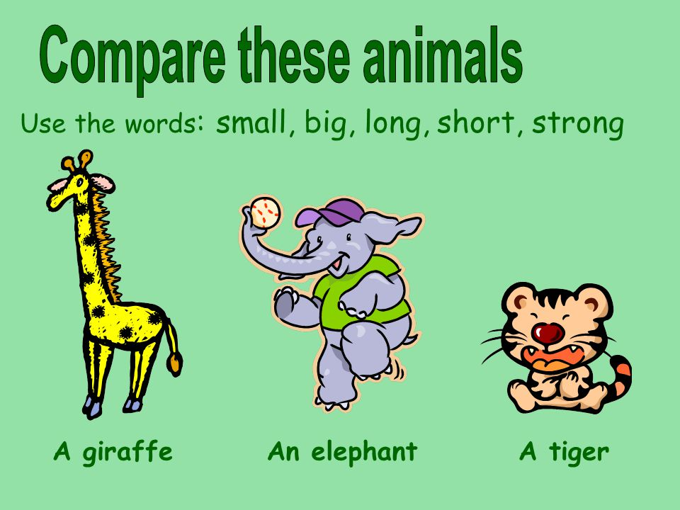 Use the words: small, big, long, short, strong