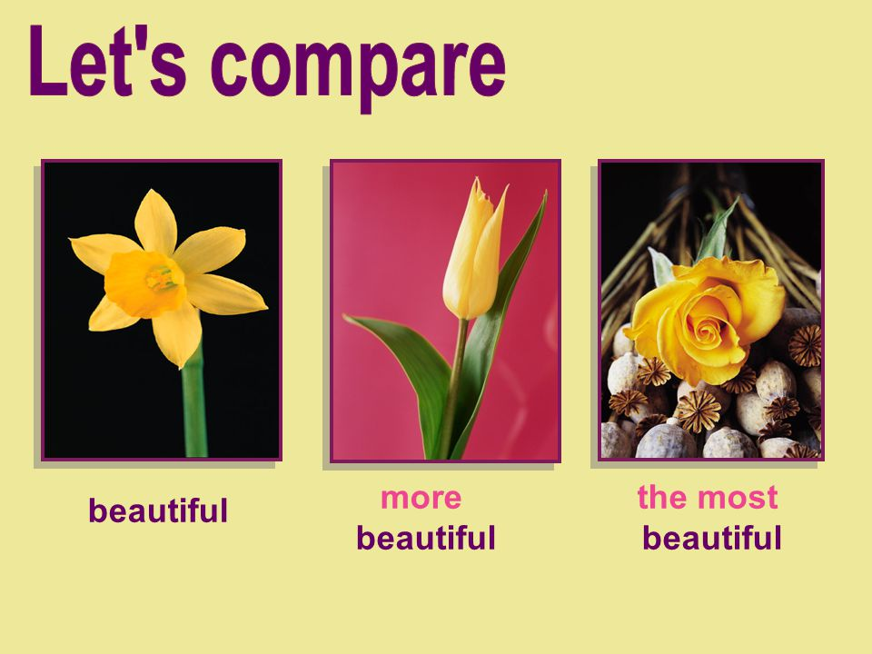 Let s compare more beautiful the most beautiful beautiful