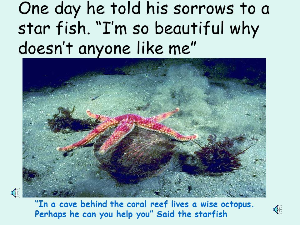 One day he told his sorrows to a star fish