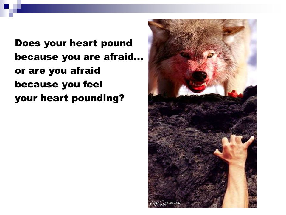 Does your heart pound because you are afraid... or are you afraid.