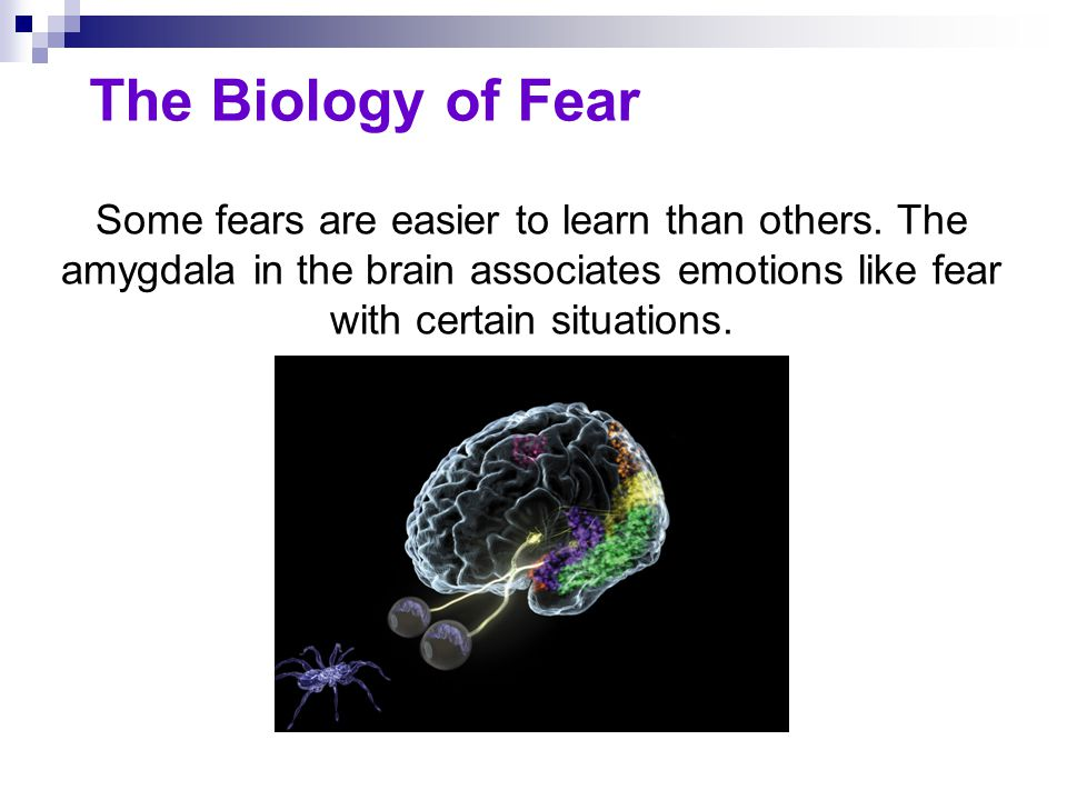 The Biology of Fear Some fears are easier to learn than others. The amygdala in the brain associates emotions like fear with certain situations.