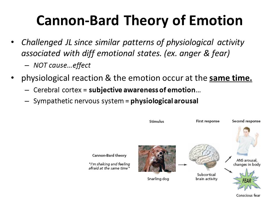 Cannon-Bard Theory of Emotion