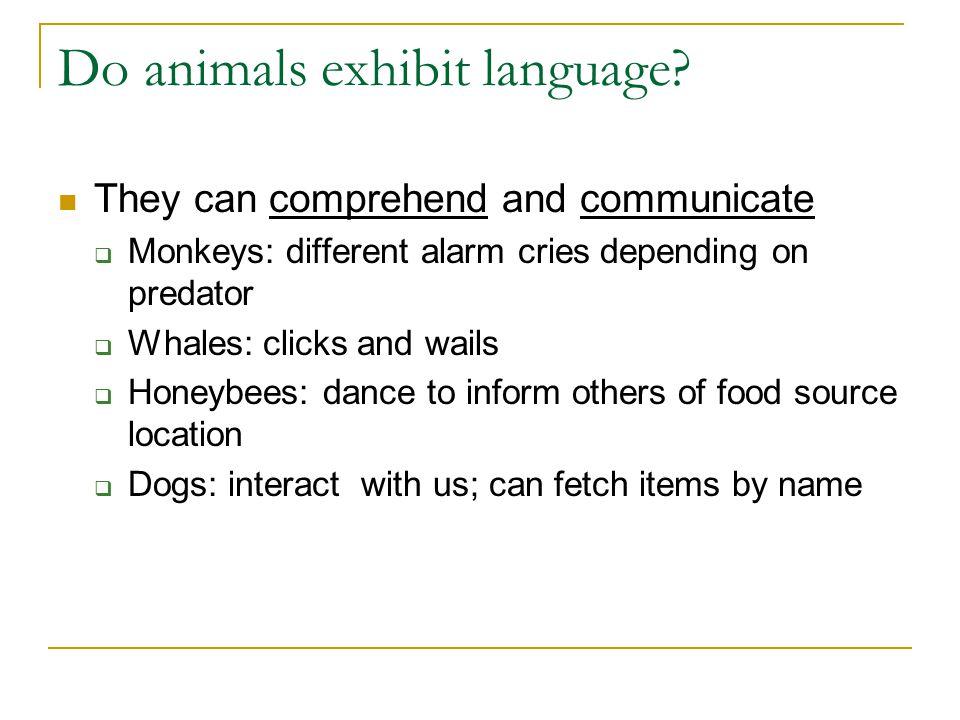 Do animals exhibit language