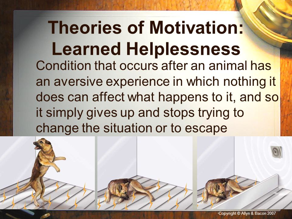 Theories of Motivation: Learned Helplessness