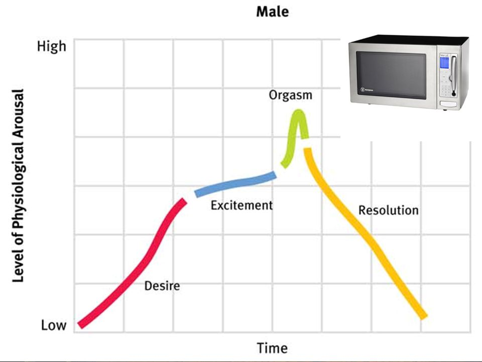 Sexual Response Cycle Excitement Plateau Orgasm Resolution