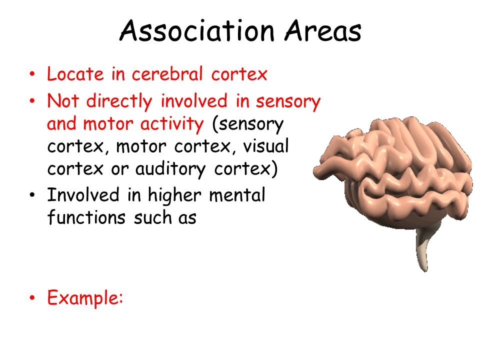 Association Areas Locate in cerebral cortex