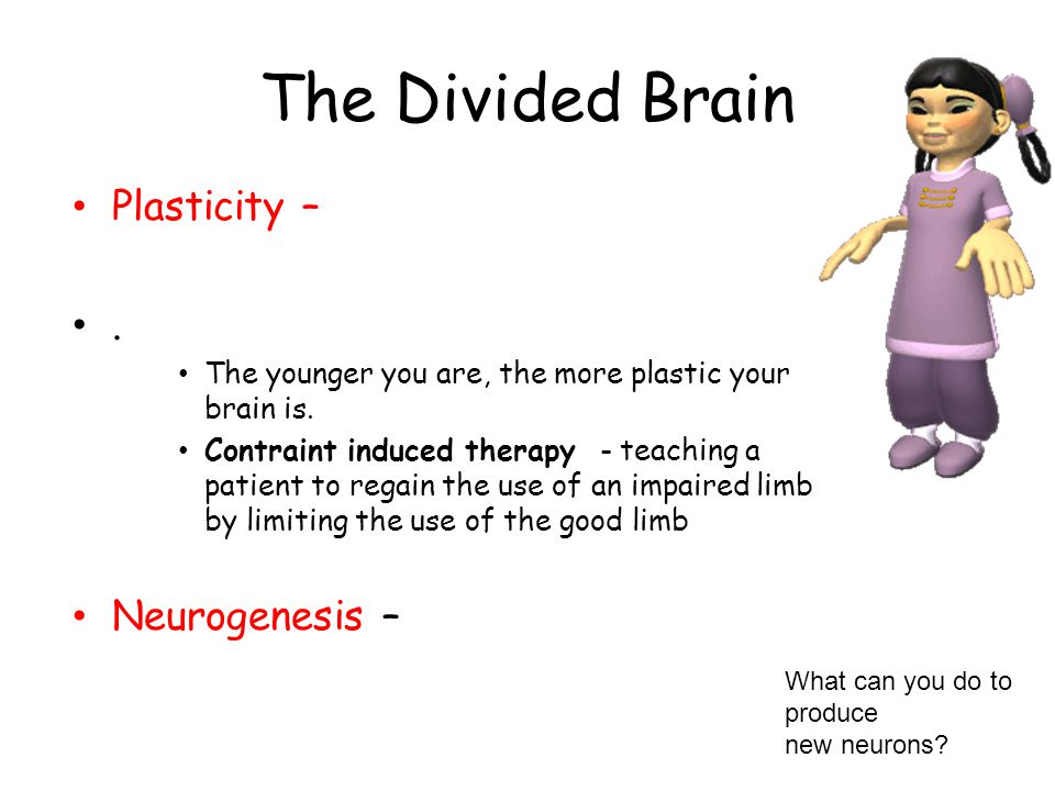 The Divided Brain Plasticity – . Neurogenesis –
