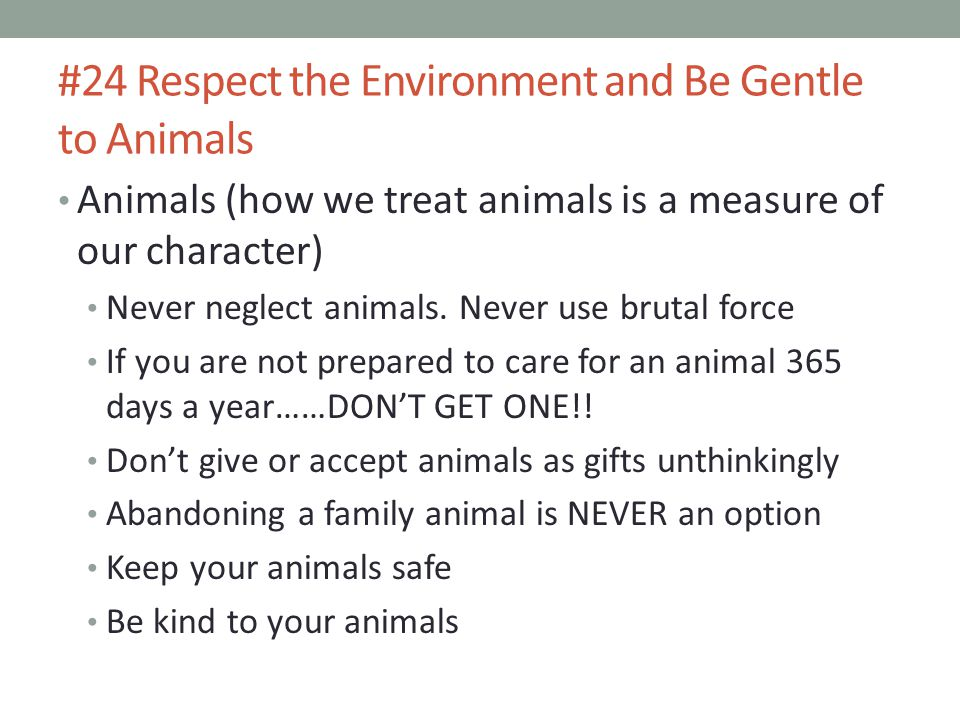 #24 Respect the Environment and Be Gentle to Animals