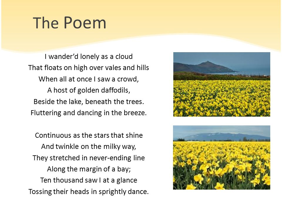 "an essay about the poem of the daffodils Any academic essay must have a thesis statement and a poetry essay is no  for  example, you might decide that william wordsworth's poem ""daffodils"" is."