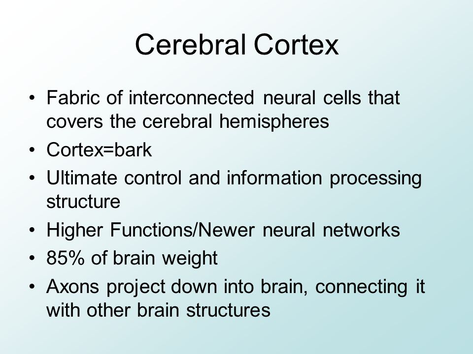 Cerebral Cortex Fabric of interconnected neural cells that covers the cerebral hemispheres. Cortex=bark.