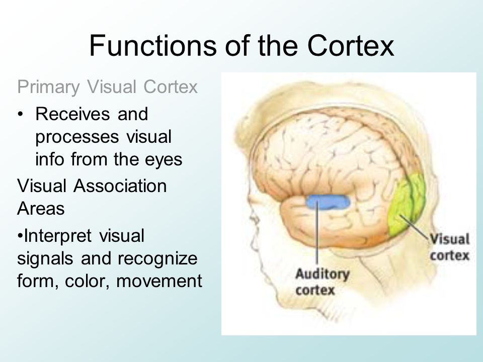 Functions of the Cortex