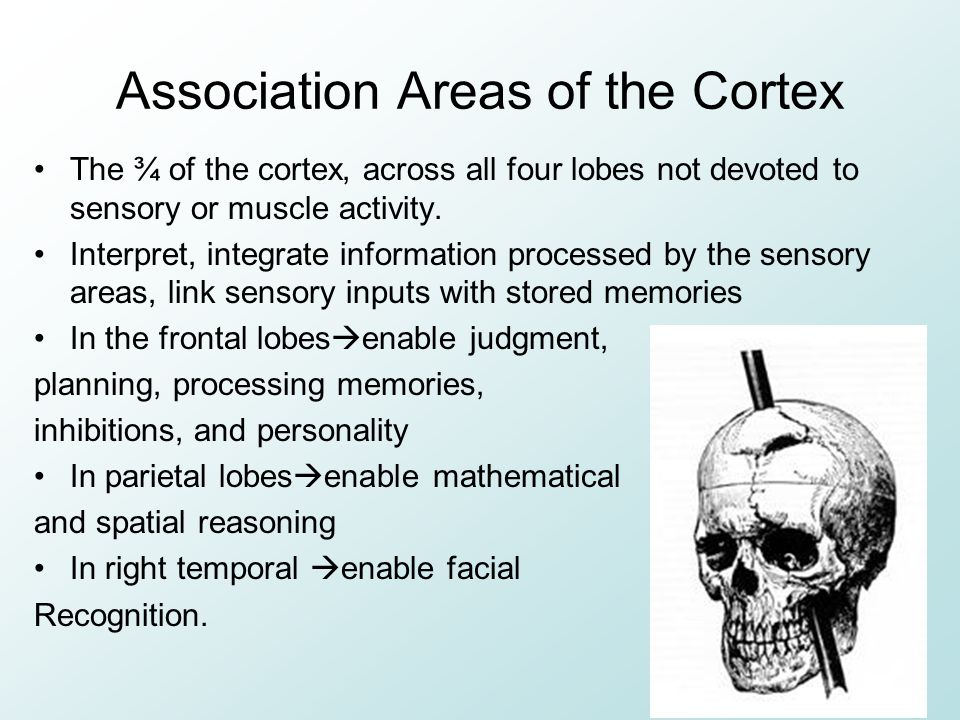 Association Areas of the Cortex