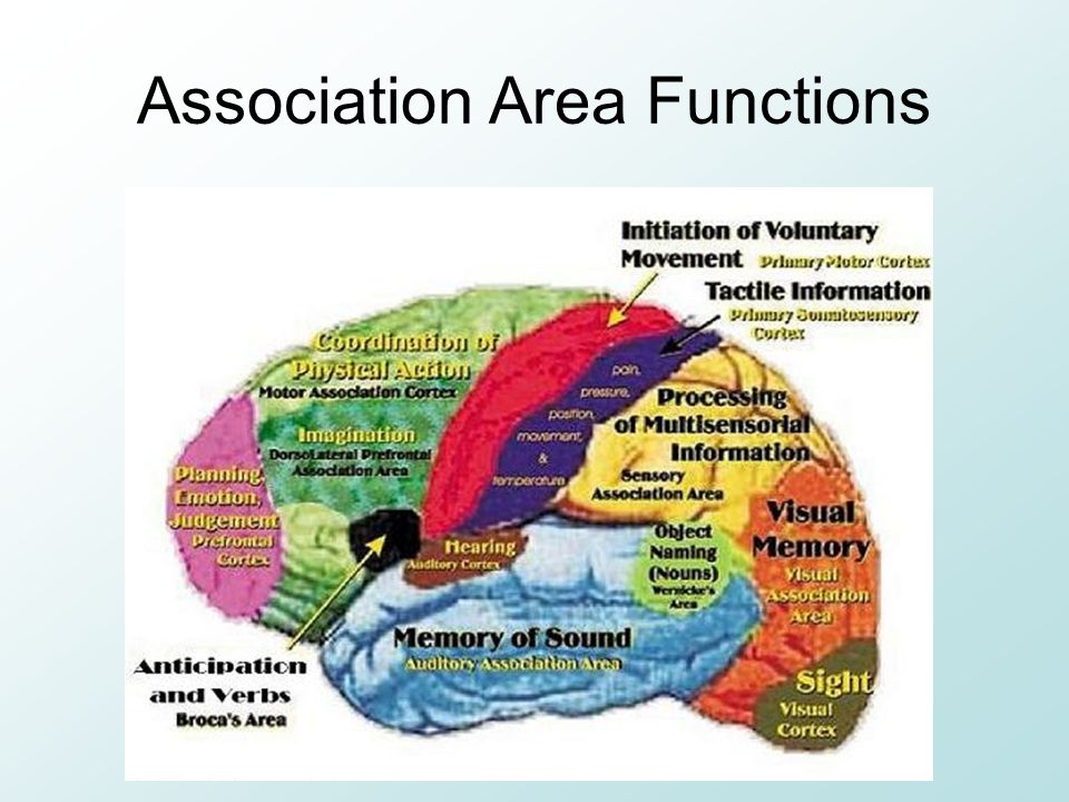 Association Area Functions