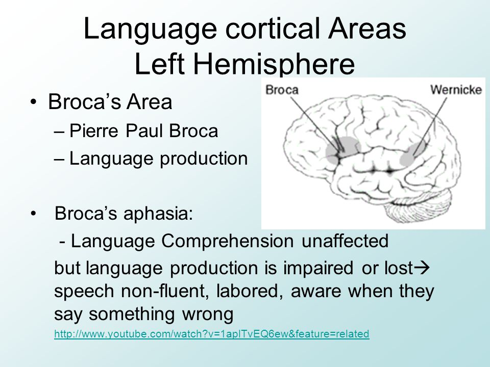 Language cortical Areas Left Hemisphere