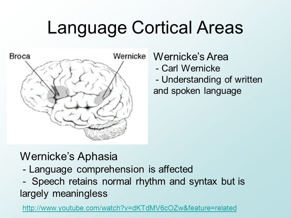Language Cortical Areas