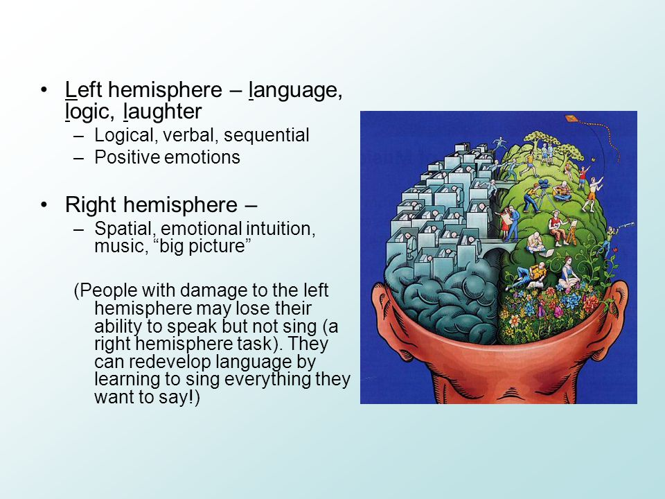 Left hemisphere – language, logic, laughter