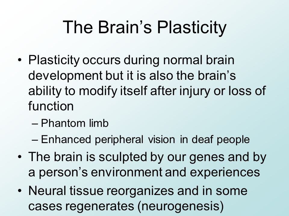 The Brain's Plasticity