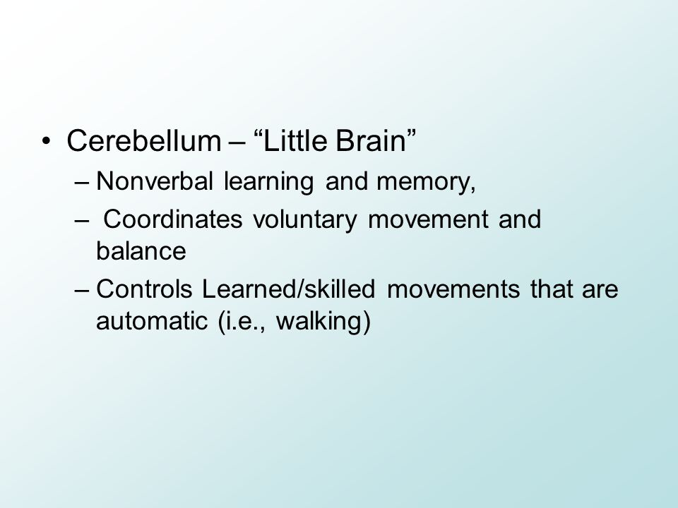 Cerebellum – Little Brain