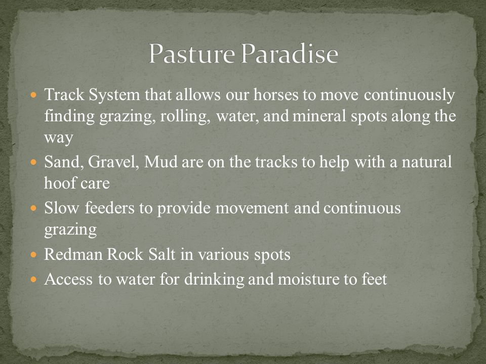 Pasture Paradise Track System that allows our horses to move continuously finding grazing, rolling, water, and mineral spots along the way.