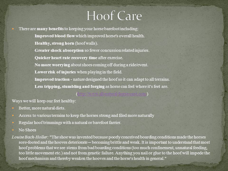 (http://www.all-natural-horse-care.com )