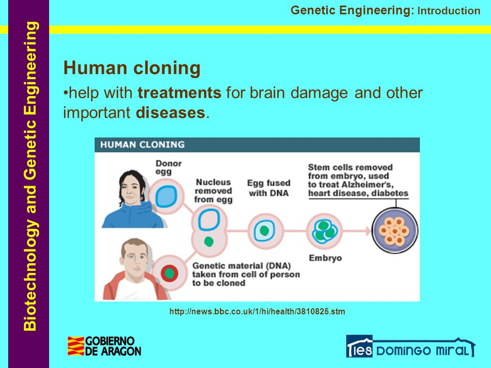 Human cloning help with treatments for brain damage and other important diseases.